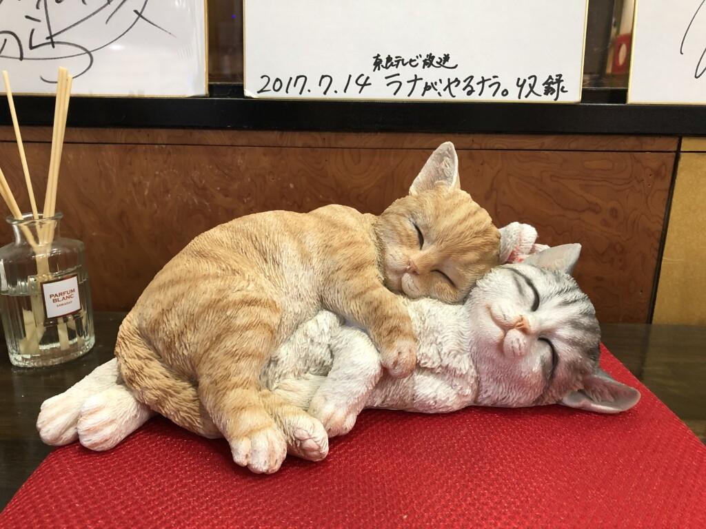 Cat Cafe心猫(ここね)はかわいい猫ちゃんがいっぱい!癒されスポット!